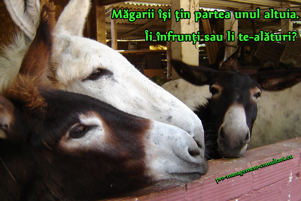 Magarii 3