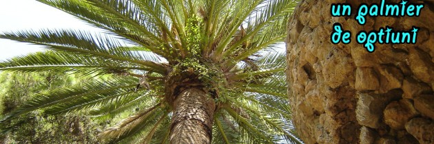The free will – a palm tree of options. Do you choose with your eyes to the sky?